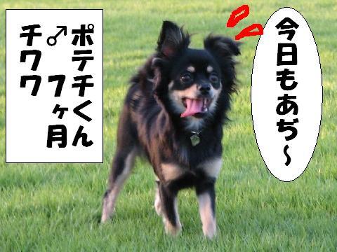 20060716200149.jpg