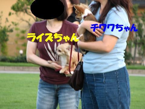 20060719231540.jpg