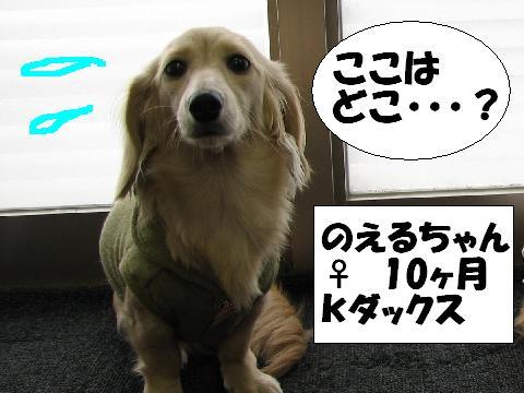 20060818105635.jpg