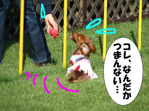 20060920195035.jpg