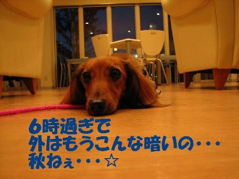 20060922214041.jpg