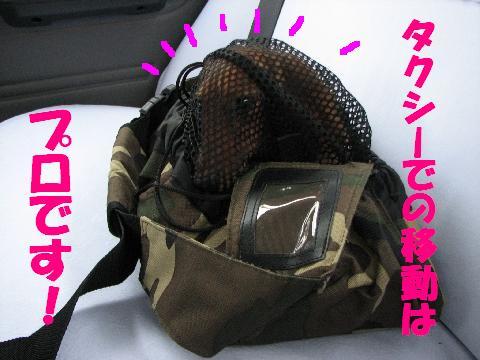 20061006210916.jpg