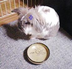 いじけるウサギ・・・