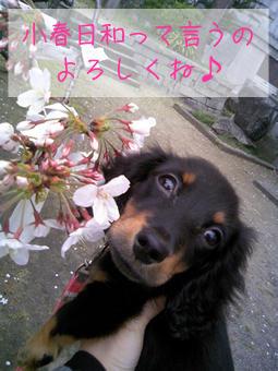 20070410_01.jpg