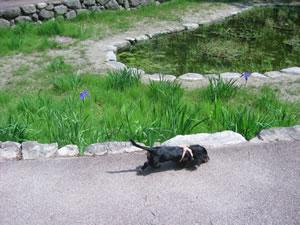 白水大池公園 福岡県春日市