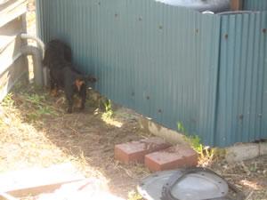 井戸修理の手伝いをする小春