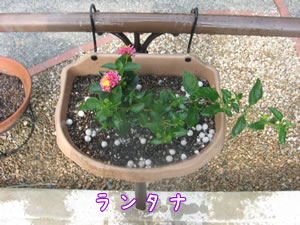 紫陽花--毎日が「小春日和」--