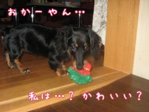 20070608_01.jpg