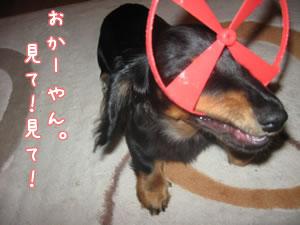 20070612_07.jpg