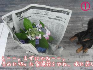 20070613_01.jpg