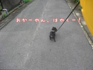 20070618_02.jpg