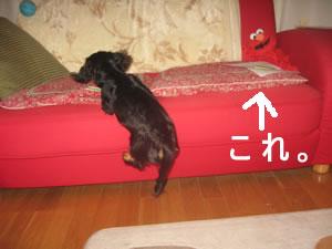 20070623_07.jpg