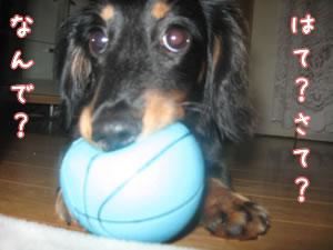 ボールをくわえて走る小春