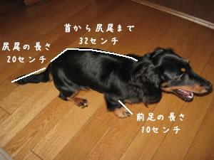20070719_01.jpg