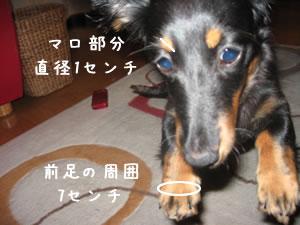 20070719_02.jpg