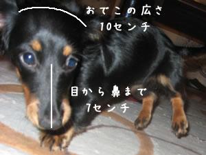 20070719_03.jpg