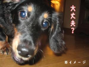 20070721_02.jpg