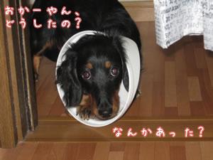 20070807_06.jpg