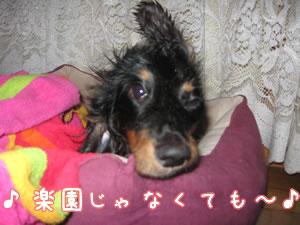 20070831_01.jpg