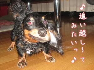 20070831_04.jpg
