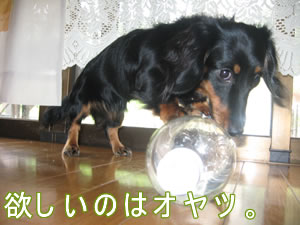 20070903_03.jpg