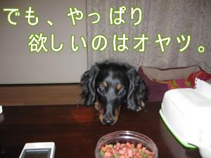 20070903_04.jpg