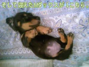 20070918_01.jpg