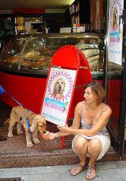 オーストリア初の犬専用アイスクリームを販売した「ロリー」(石井群也撮影)