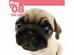 THE DOG 国内版2008年犬種別カレンダー パグ