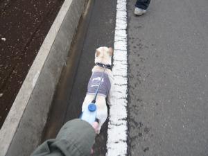 お散歩・・・