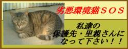 20060520222359.jpg