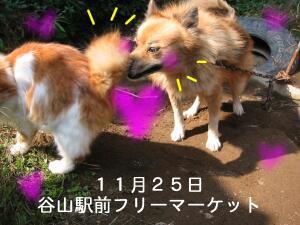 20061119034010.jpg