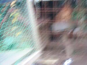 20061208070318.jpg