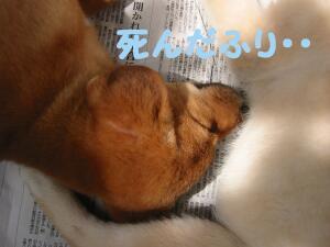 20070524235814.jpg