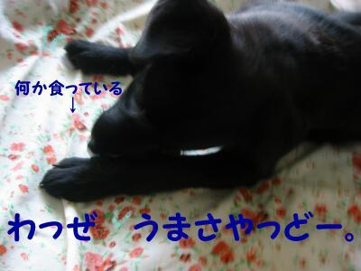 20070629171208.jpg