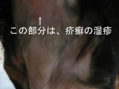 20070717003420.jpg