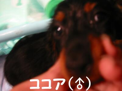 20070729103321.jpg