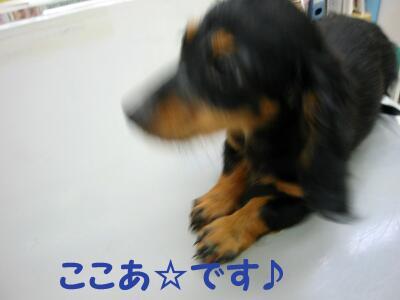 20070813162649.jpg