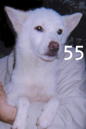 55_189.jpg