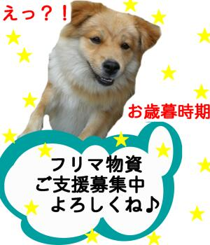 CIMG0839-furima.jpg