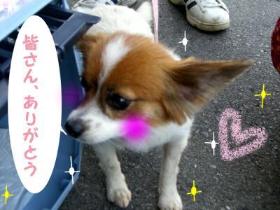 CIMG4620-4.jpg