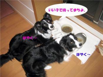 IMG_0318-1.jpg