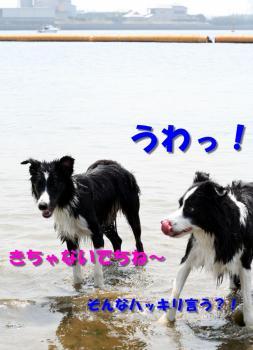 IMG_6602-1.jpg