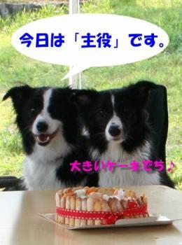 IMG_6716-1.jpg