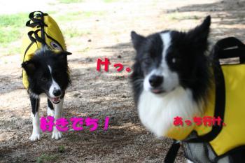 IMG_7534-1.jpg