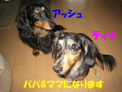 IMG_1242a.jpg