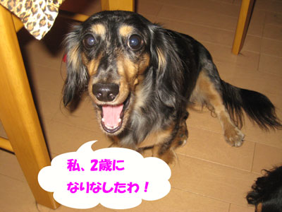 IMG_1266a.jpg