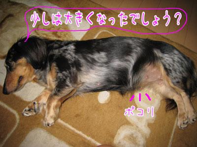 IMG_1290a.jpg