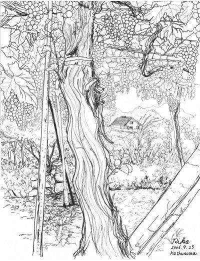 ぶどう園の木の下で