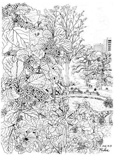 皇居外苑(ガマズミ)絵